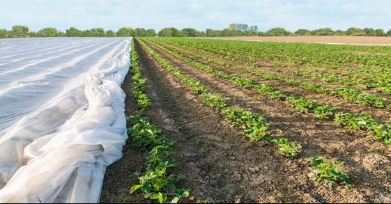 مصارف کشاورزی پارچههای اسپان باند